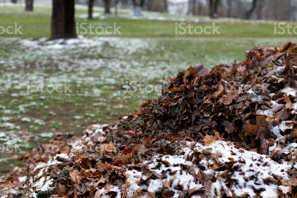 A pile of fallen faded dry autumn leaves under snow - Royalty-free Autumn Stock Photo