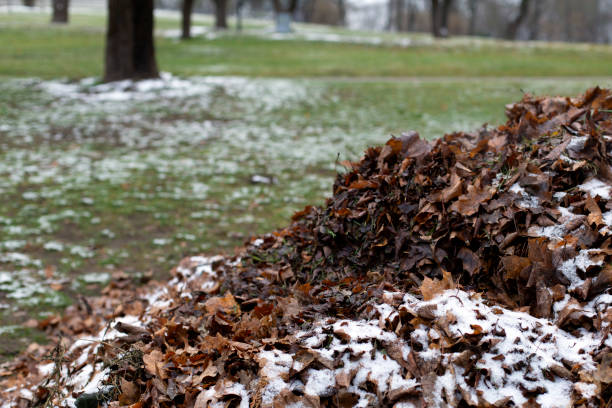 A pile of fallen faded dry autumn leaves under snow stock photo