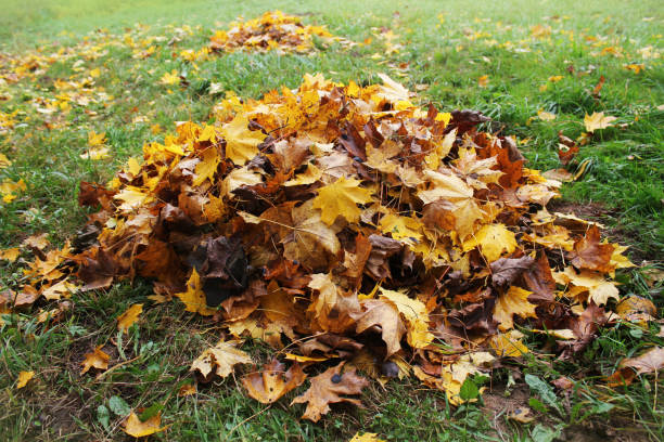 Pile of fallen leaves in autumn park. Fall background stock photo