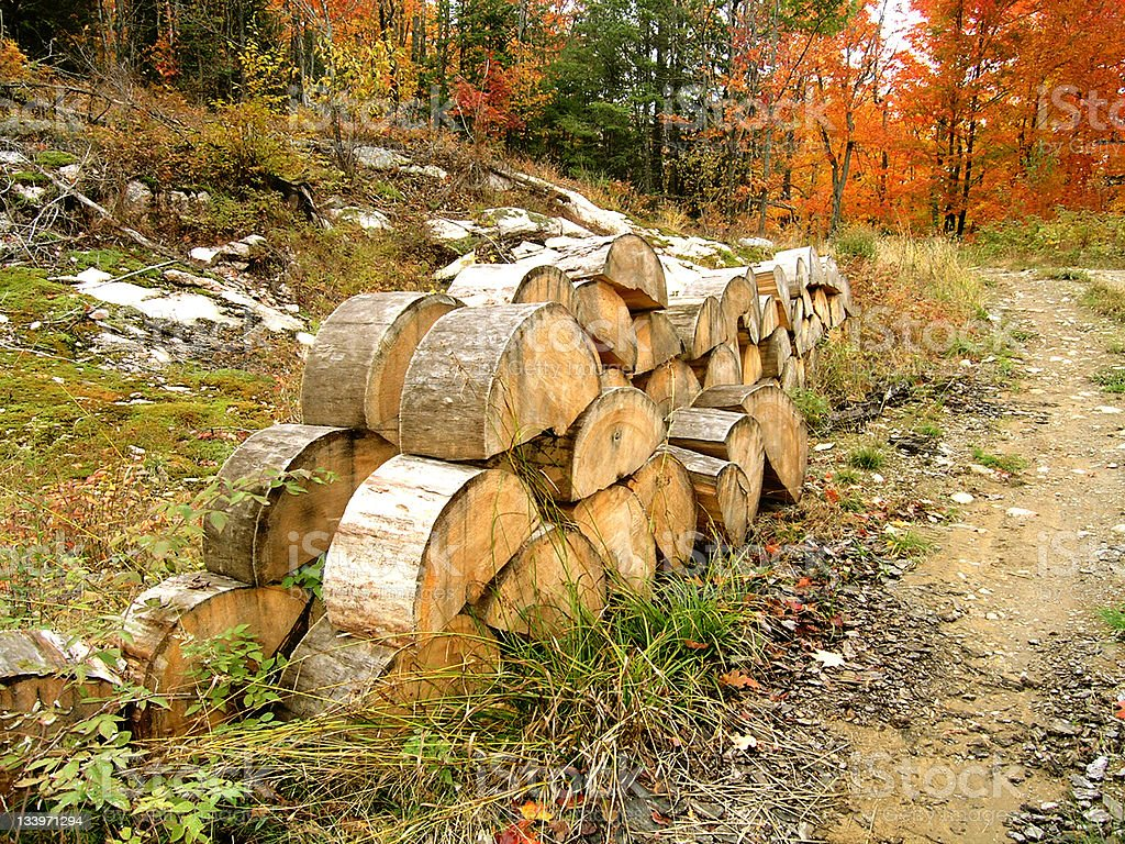 A pile of firewood in Autumn royalty-free stock photo