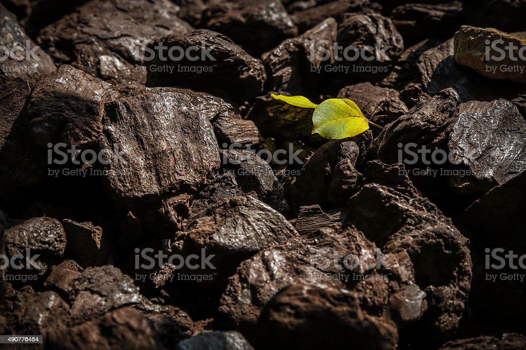 Pile of fossile wood, coal stock photo