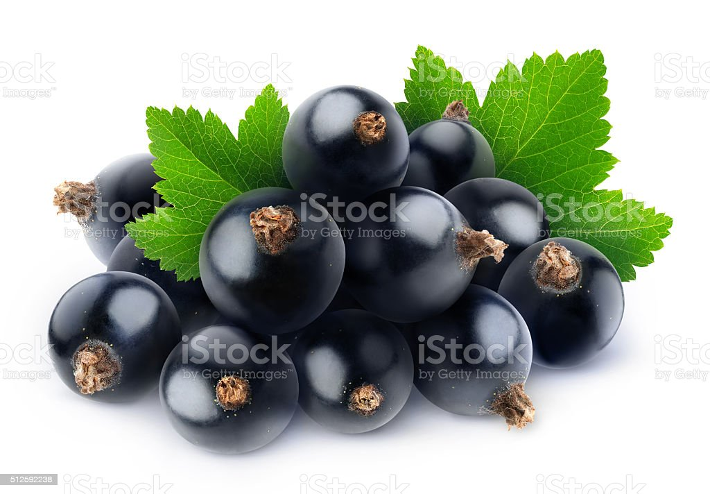 Pile of fresh black currants isolated on white stock photo