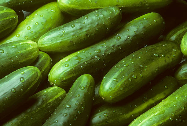 pile of fresh cucumbers lying diagonally - cucumber stock photos and pictures