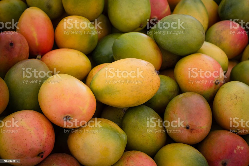 pile of fresh mango fruits stock photo