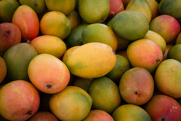 pile of fresh mango fruits - foto de stock