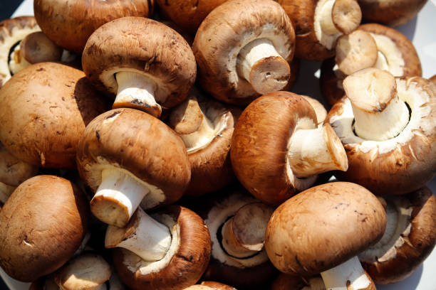 A pile of fresh mushrooms stock photo
