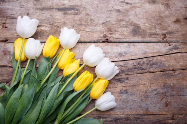 haufen von frischen weißen und gelben tulpen auf dem tisch - hochzeitsspiele eltern stock-fotos und bilder