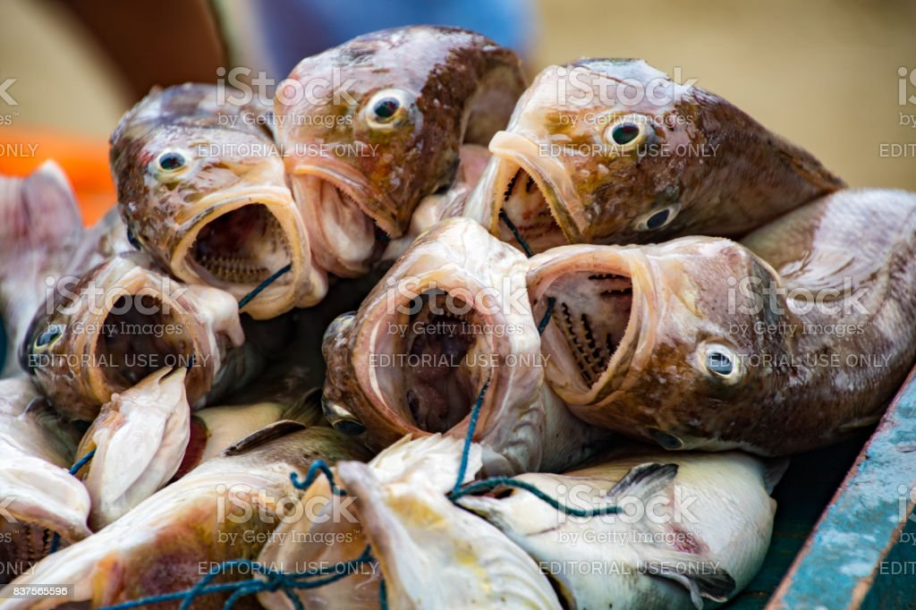 Pile of freshly caught fish in Puerto Lopez, Ecuador stock photo