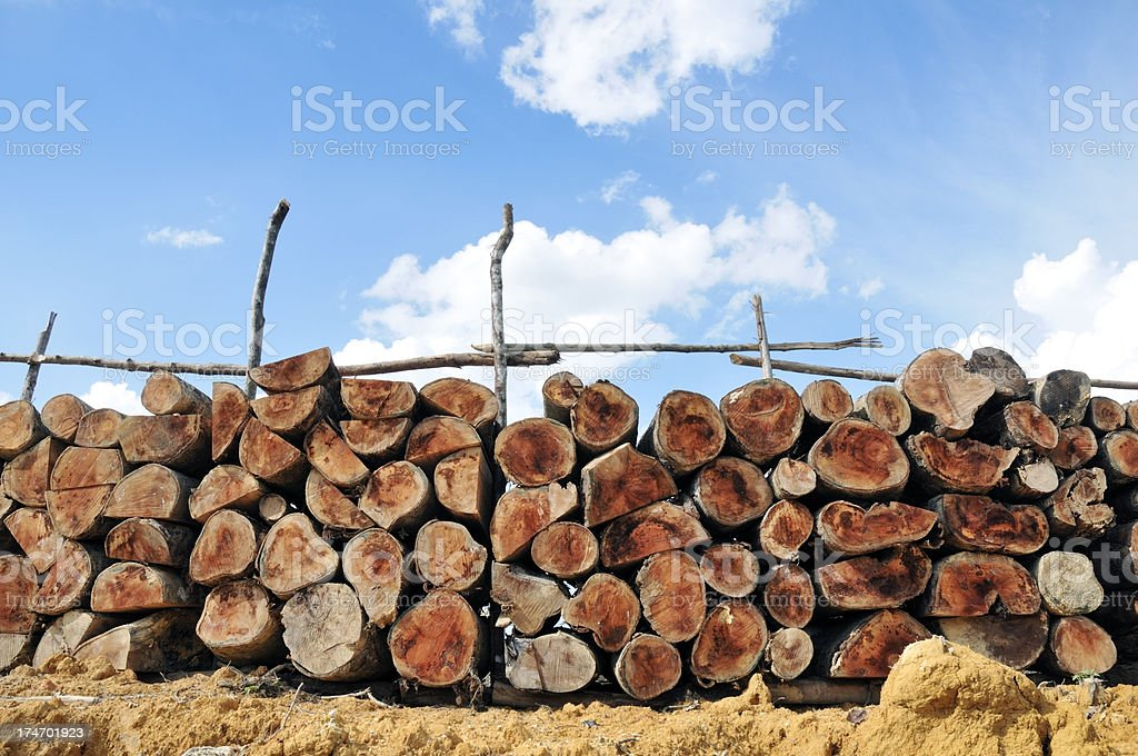 Pile of freshly cut logs royalty-free stock photo