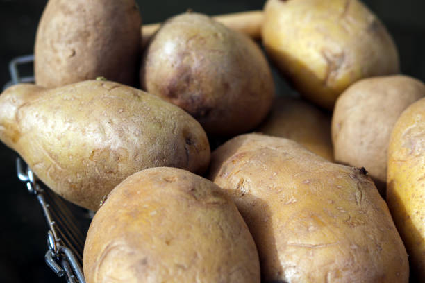 A pile of garden potatoes stock photo