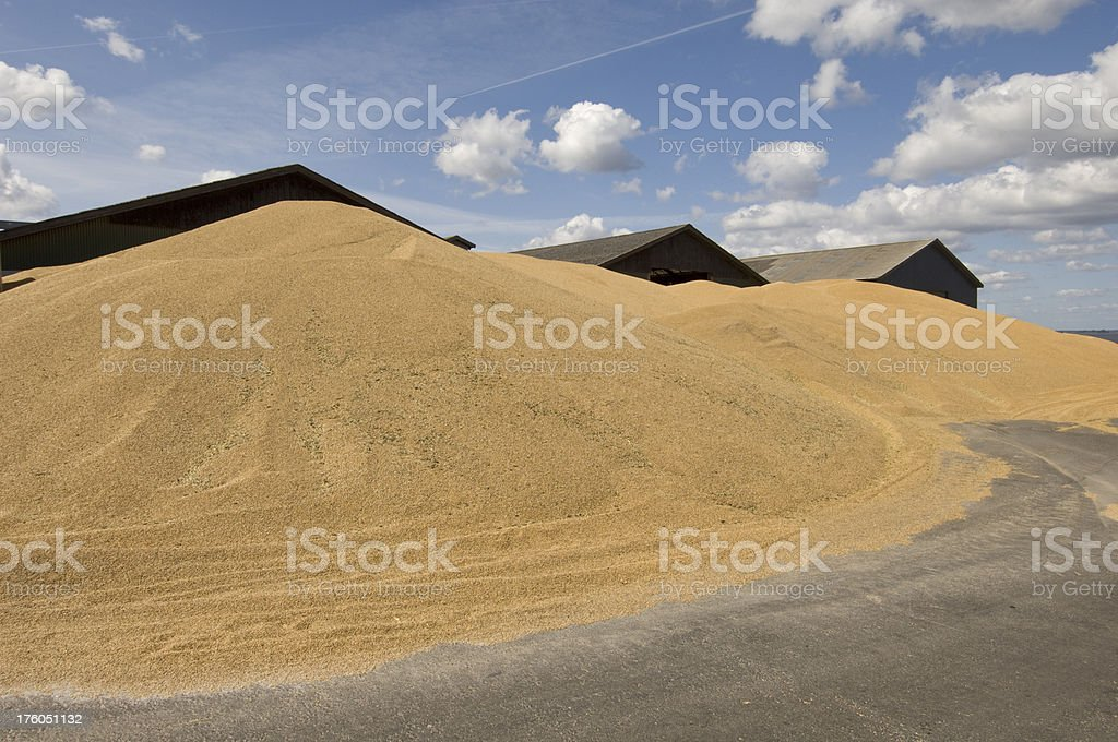 Pile of Grain Waiting to be Processsed at the Depot stock photo