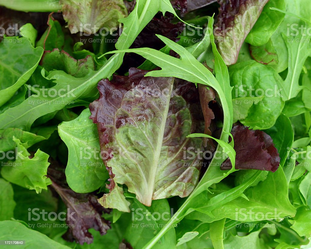 A pile of green and purple leaves like lettuce and arugula stock photo