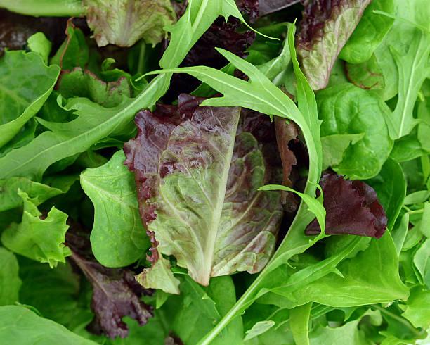 lettuces - lila palette stock-fotos und bilder