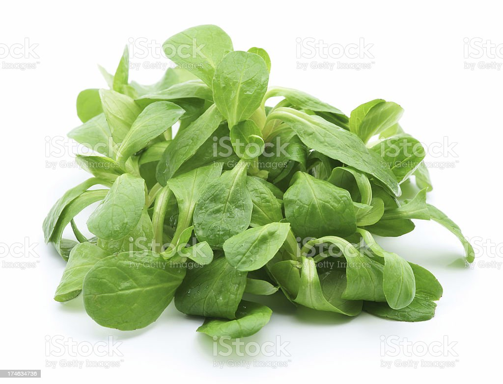 A pile of green baby lettuce isolated on white stock photo