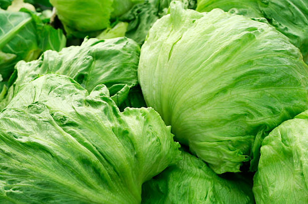pile of green, iceberg lettuce - lettuce stock pictures, royalty-free photos & images