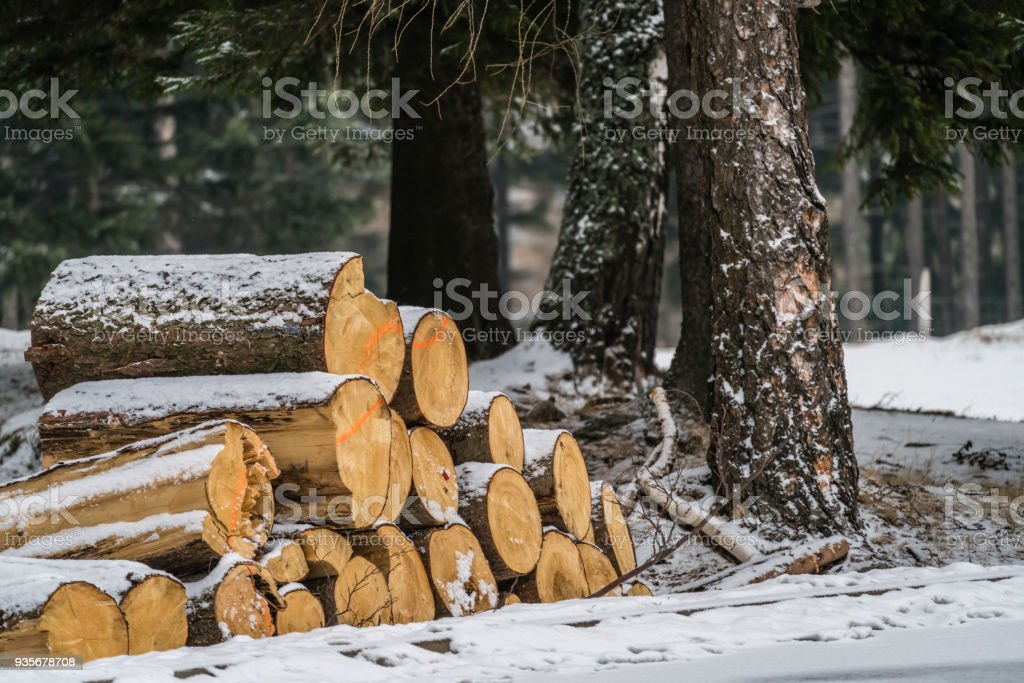A pile of large wooden logs in the snow stock photo
