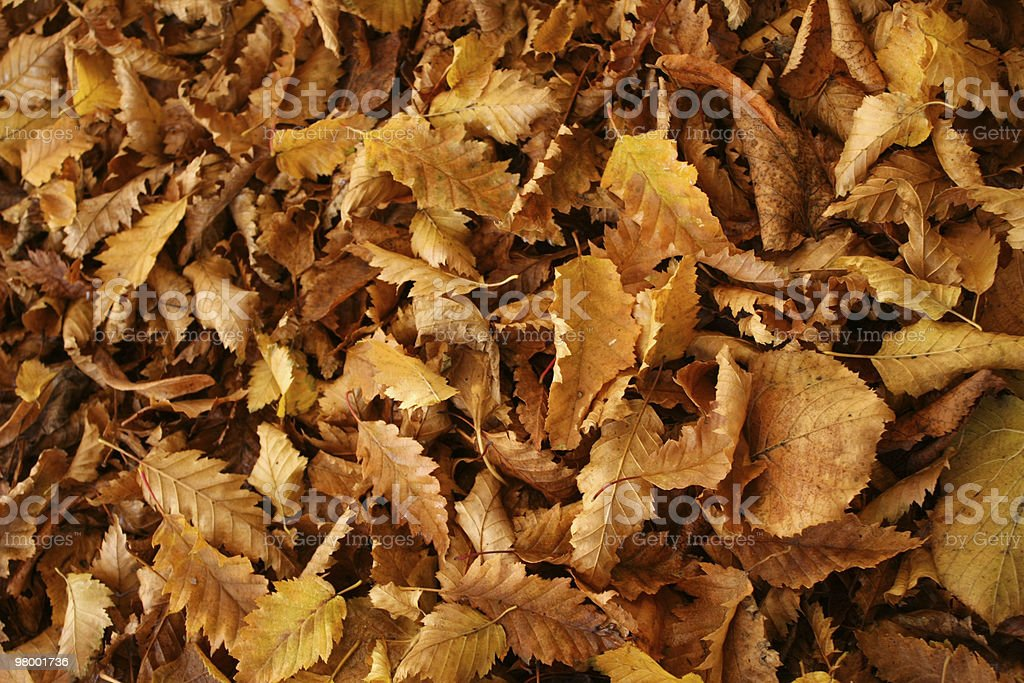 Pile of Leaves royalty-free stock photo
