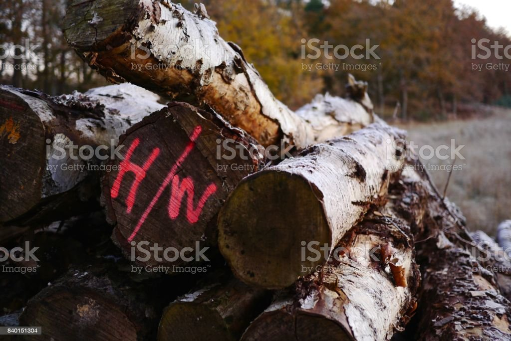 Pile of logs in winter stock photo