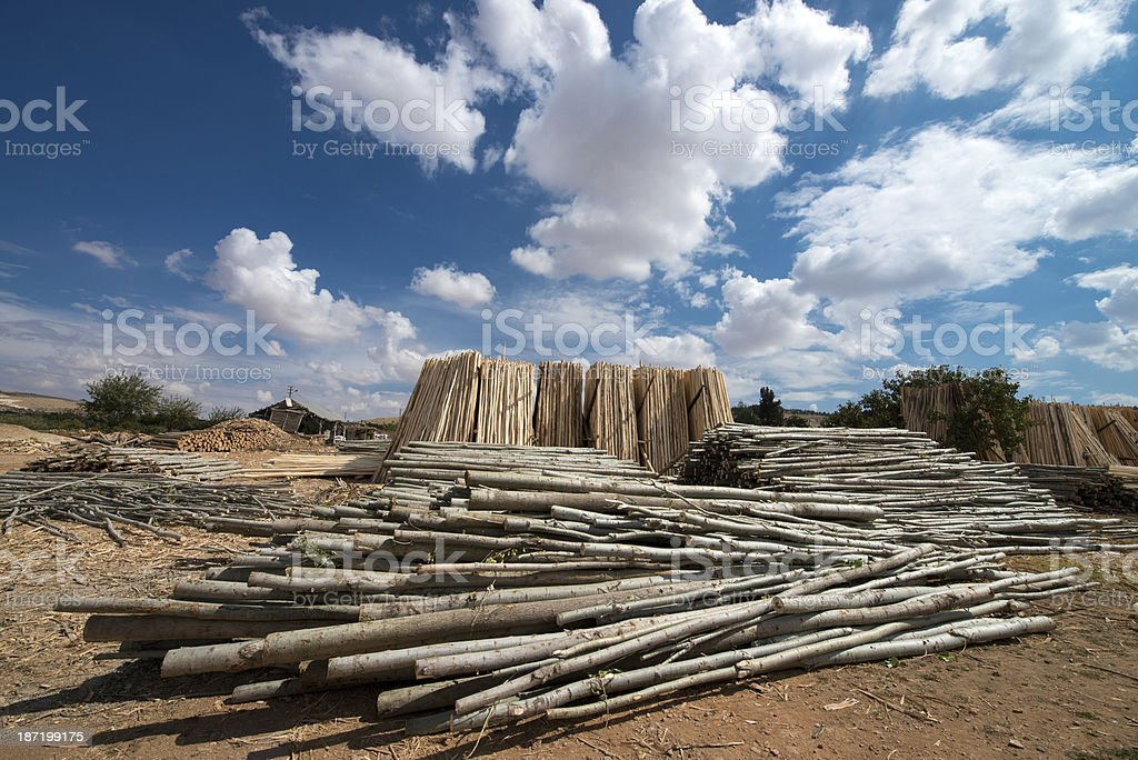 Pile of logs royalty-free stock photo
