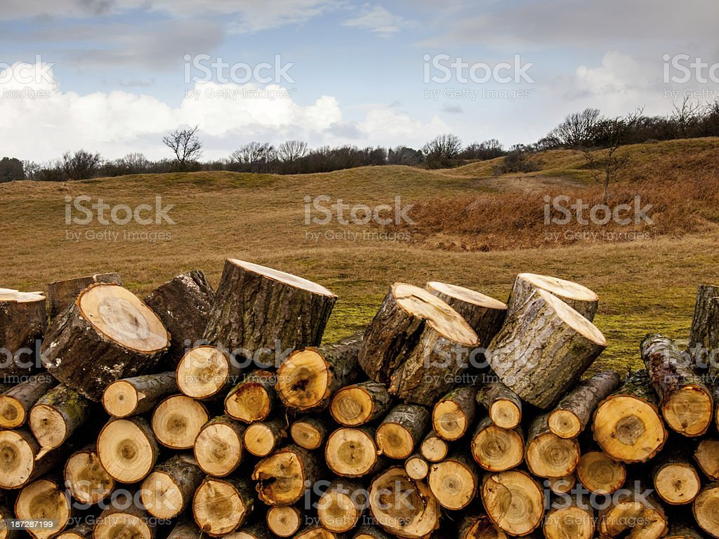 Pile of logs with dune landscape in the background royalty-free stock photo