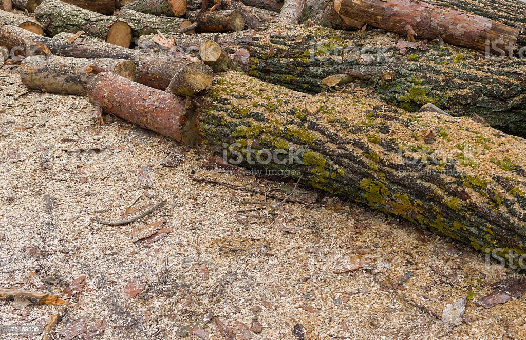 Pile of lumbers prepared for sawing stock photo