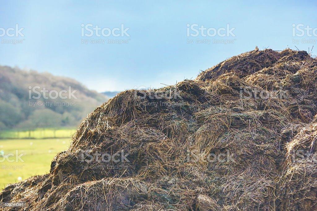 Pila de estiércol, natural fertilser, en un entorno rural. foto de stock libre de derechos