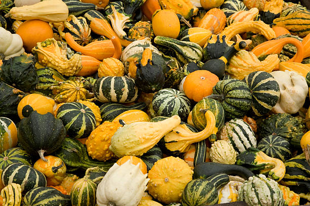 pile of miscellaneous gourds stock photo