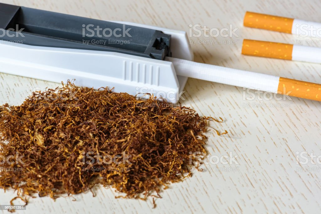A pile of natural tobacco on a white wooden table and a device for manual cigarette making. Smoking. Nicotine addiction. Health hazard. royalty-free stock photo
