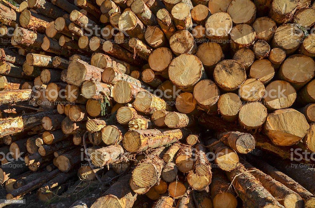 pile of pine tree logs stock photo
