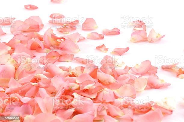 Pile of pink romantic rose petals picture id178966545?b=1&k=6&m=178966545&s=612x612&h=nh6xdgp wco0dsutxga36uexogo5fvfvjzj ubtfmpw=