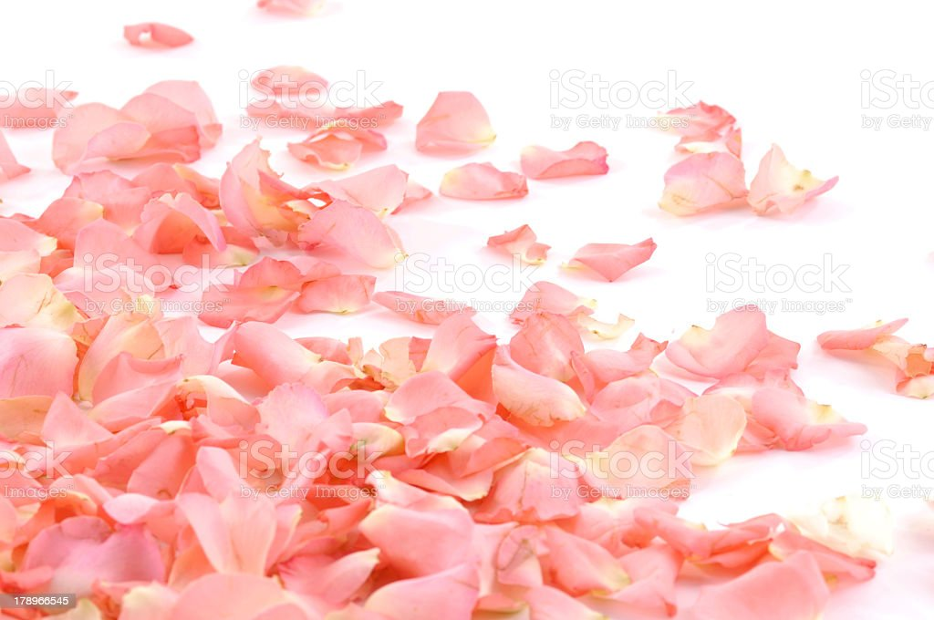 A pile of pink romantic rose petals stock photo