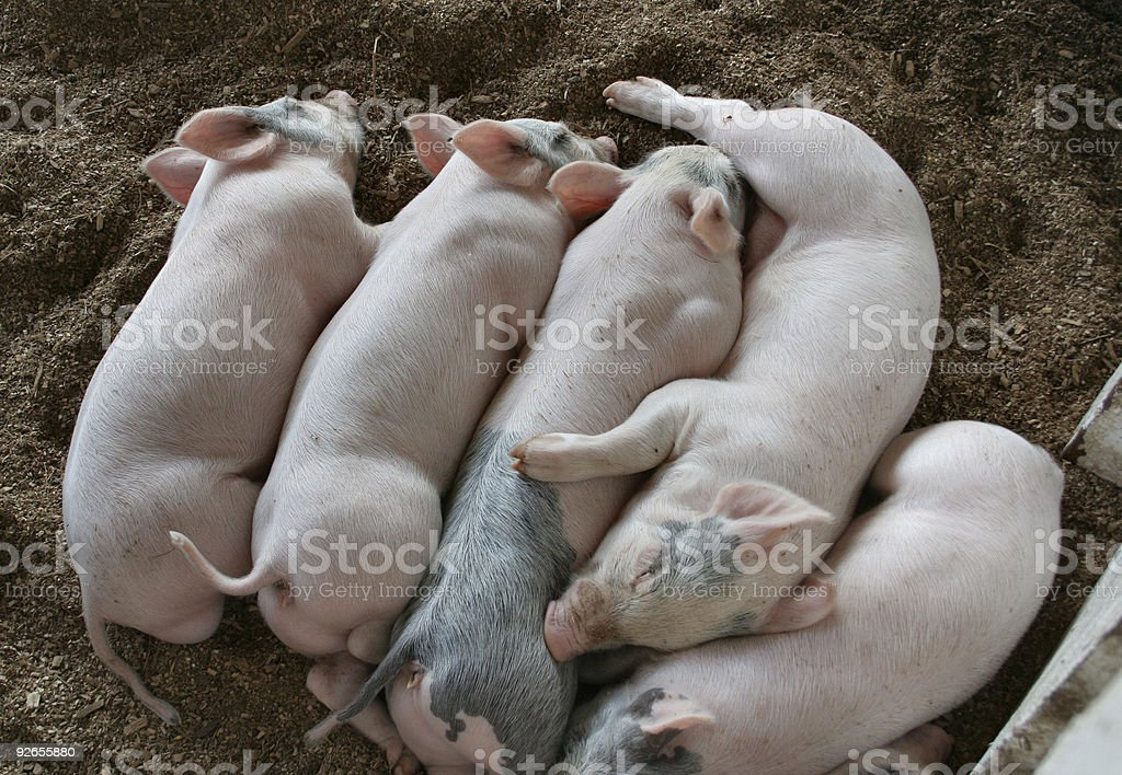 Pile of Played-Out Piggies royalty-free stock photo