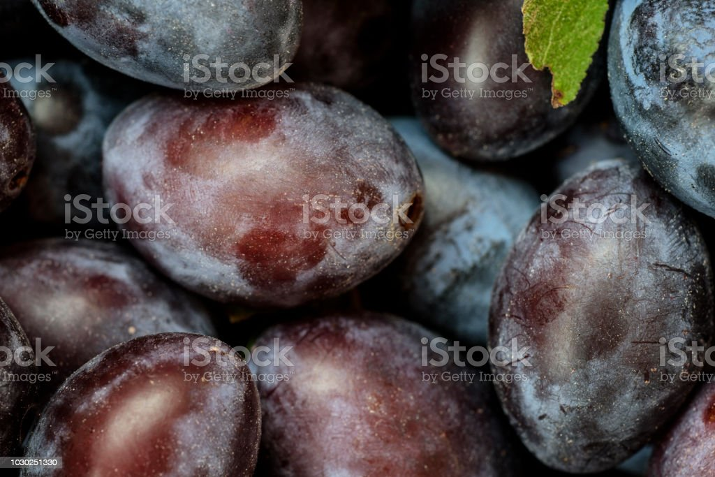 Pile of Plums stock photo
