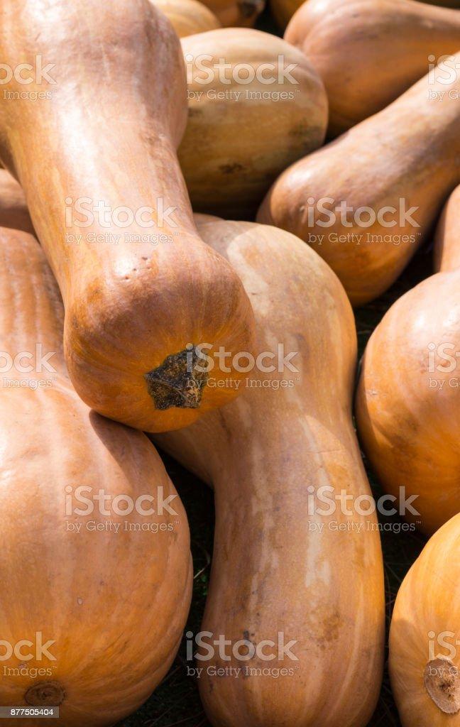 pile of pumpkins at autumn harvest festival. background, vegitables. stock photo