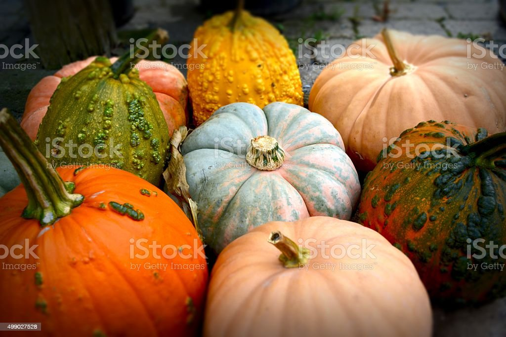 Pile of Pumpkins stock photo