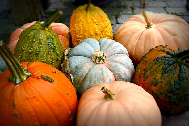 pile of pumpkins - squash komkommerfamilie stockfoto's en -beelden