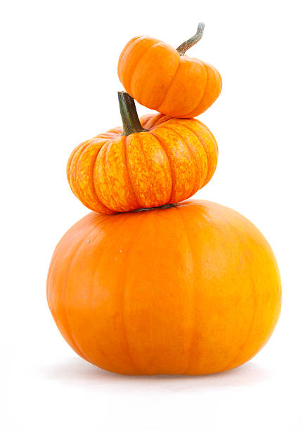 Pile of pumpkins stock photo