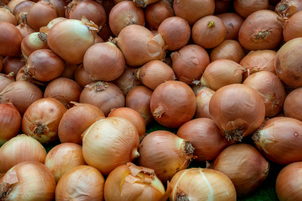 Pile of Red Onions stock photo