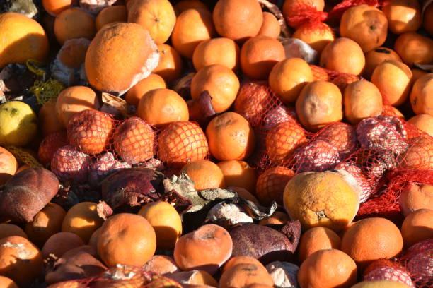 Haufen fauler Orangen – Foto