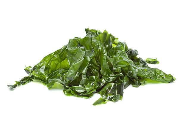 salado lechuga de mar - algas fondo blanco fotografías e imágenes de stock