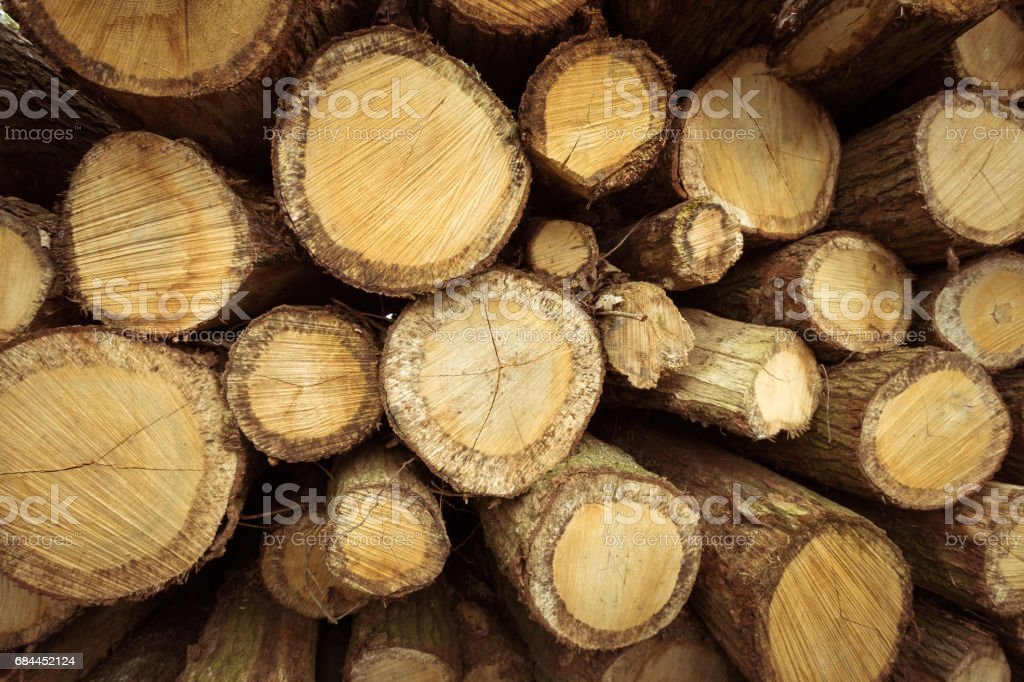 Pile of sawn logs along a forest road. – Foto