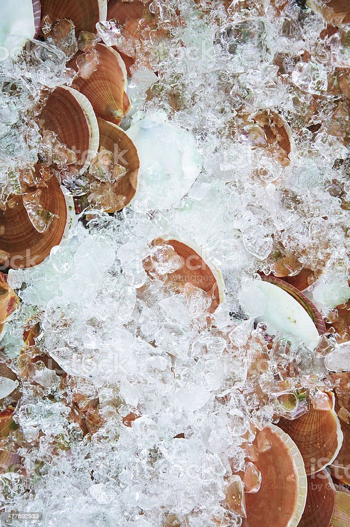 pile of scallops in seafood royalty-free stock photo