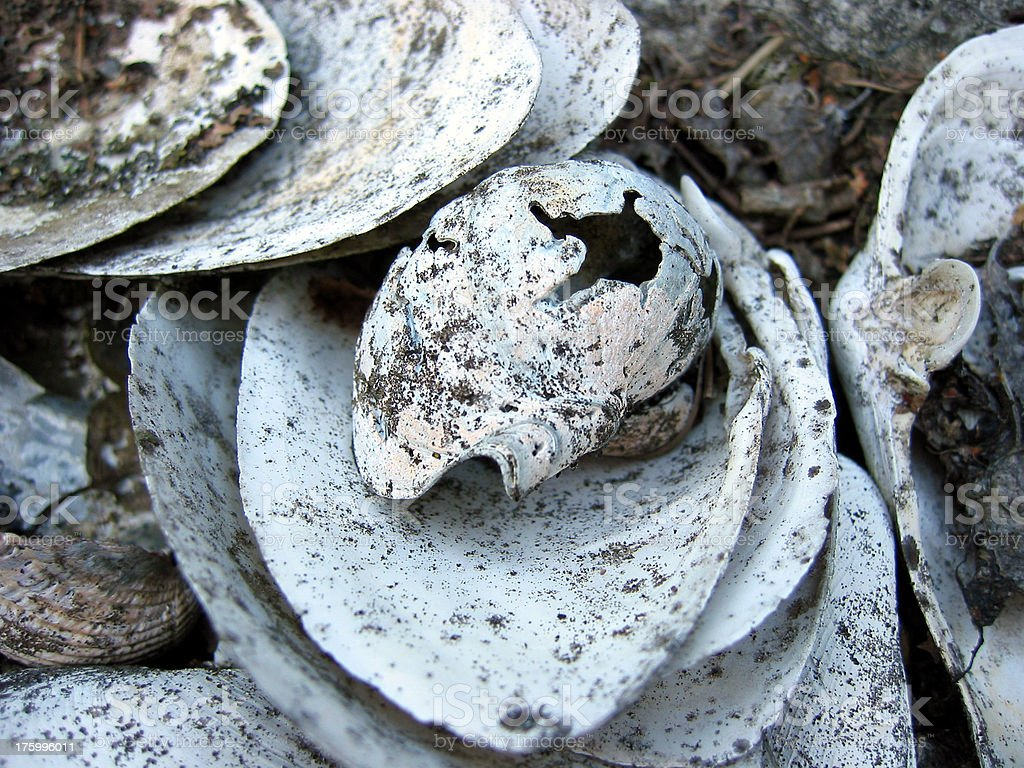 Pile of shells royalty-free stock photo