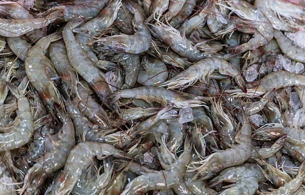 Pile of Shrimp on a table, at Dubai Fish Market stock photo