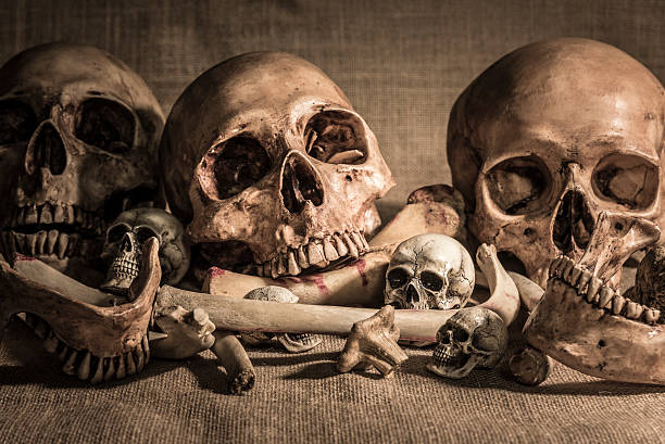 Pile of skulls and bones on sackcloth still life photography with closeup pile of skulls and animal bones on sackcloth background. Genocides concept, horror creepy halloween background genocide stock pictures, royalty-free photos & images