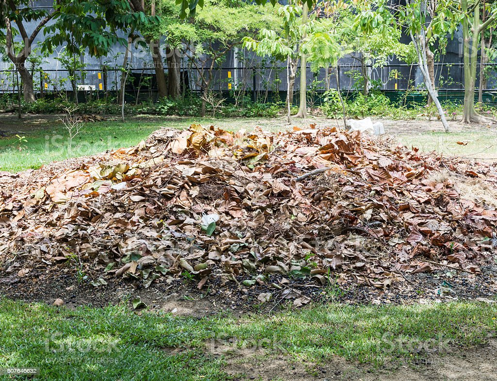 Pile of the dry leaves. stock photo