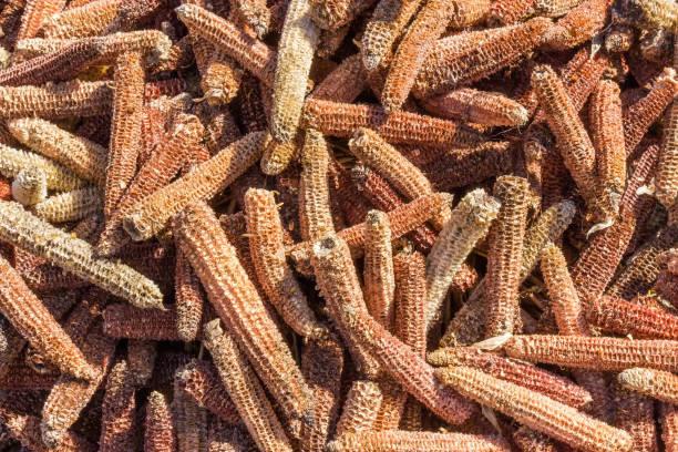 pile of the empty corn cobs after kernels removing - desperdício alimentar imagens e fotografias de stock