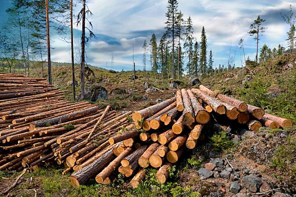 pile of timber - pine forest sweden bildbanksfoton och bilder