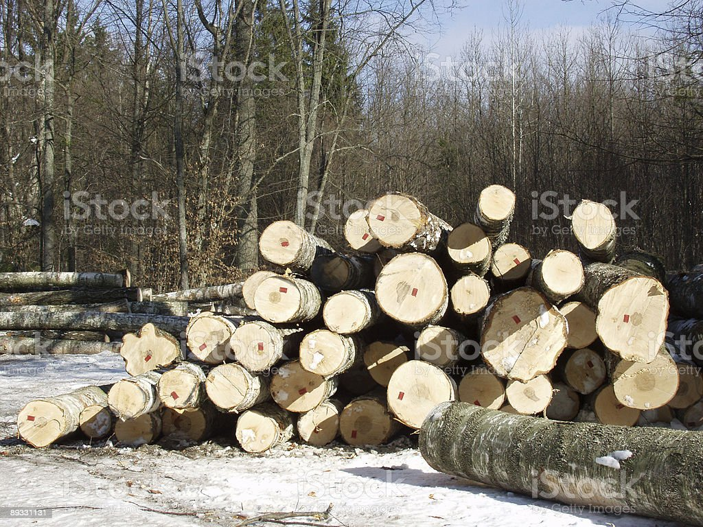 Pile of timber royalty-free stock photo