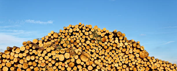 pile of tree trunks stock photo